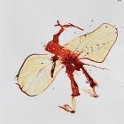 o.T.,Chinatusche auf Papier, 40 x 30 cm, 2011